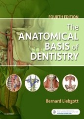 The Anatomical Basis of Dentistry, 4/e
